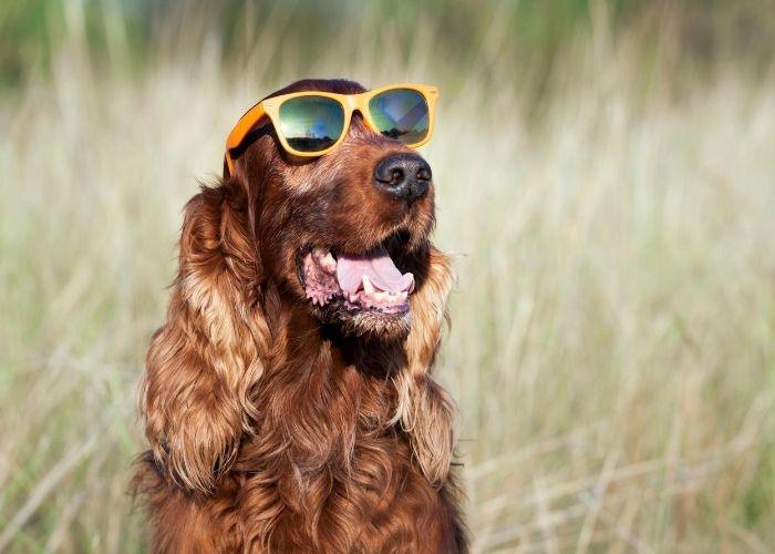 Immunsystem - Sonnenbrille ist schlecht für Vitamin D Bildung